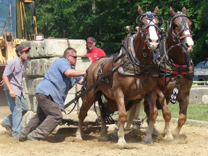 Draft Horse Competition - New Boston Invitational July 7, 2011