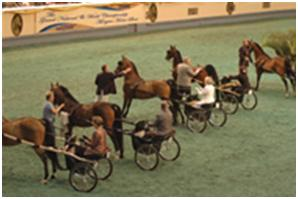 Single Horse Carriage Arena Driving